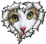 Ripped Torn Metal Heart with Cute Cat Kitten with White Face Peeping External Car Sticker 105x100mm